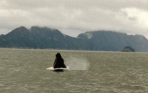 Whale At Kenai Fjords National Park