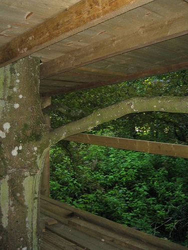 Ceiling Of Treehouse