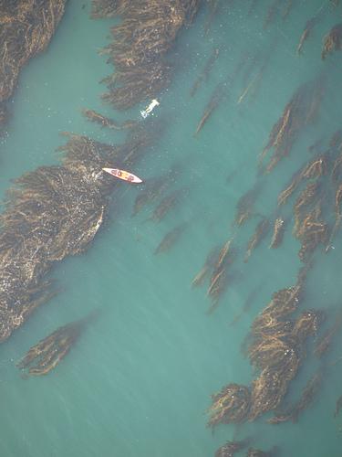 Snokeler & Kayak Off Palos Verdes